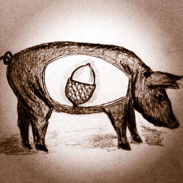 Ham (c) Sarah Starck
