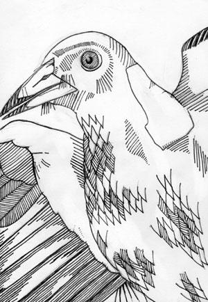 Henry Bird (c) Harry Chapman