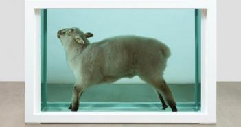 Hirst sheep