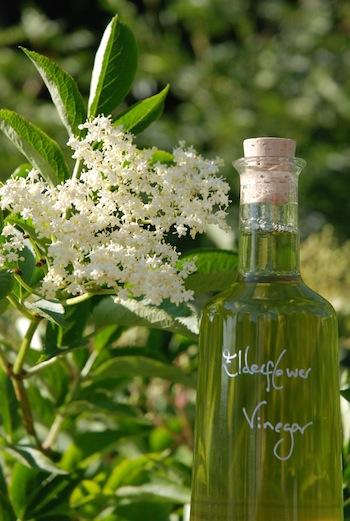 Elderflow vinegar