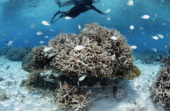 Maldives coral frame