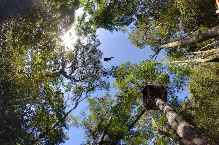 Tsitsikama Canopy