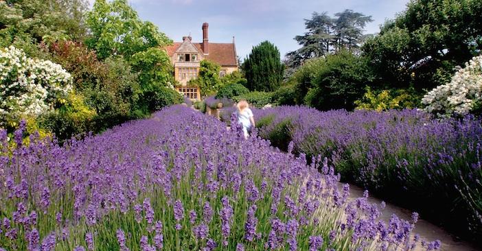 Lavender Garden Le Manoir