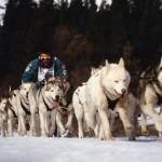 Husky sledding in Gstaad