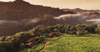 Pretty Green: Wildlife and Wellness in Rwanda