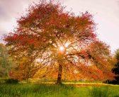 It's Leaf-Peeping Time…